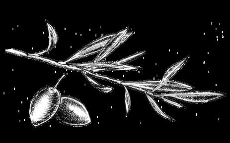 olives-30