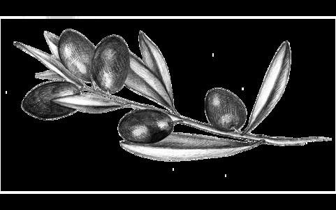 olives-15