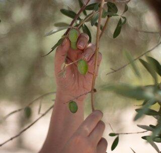 olives-12