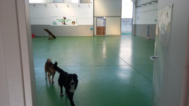 addestramento cani Milano, corsi di educazione per cani, corsi di educazione per cuccioli, istruttore cinofilo Milano, Rally-O, Scent game