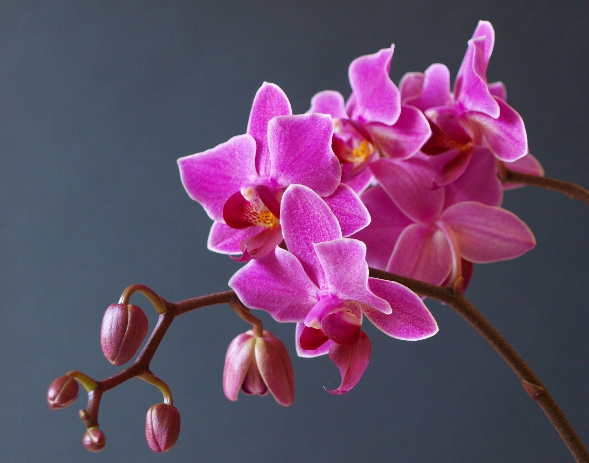 """Arriva a Palermo """"La Casa delle Orchidee"""" dentro la serra del Giardino Inglese"""