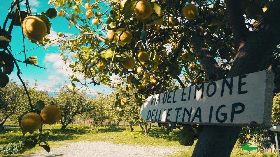 """Matteo Vitale e un nuovo modo di riutilizzare il """"pastazzo"""": il nuovo progetto siciliano per un'edilizia green"""