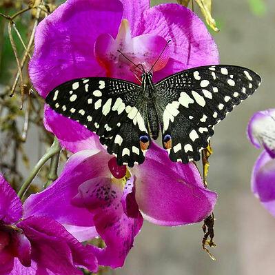 farfalle-1579711229.jpg
