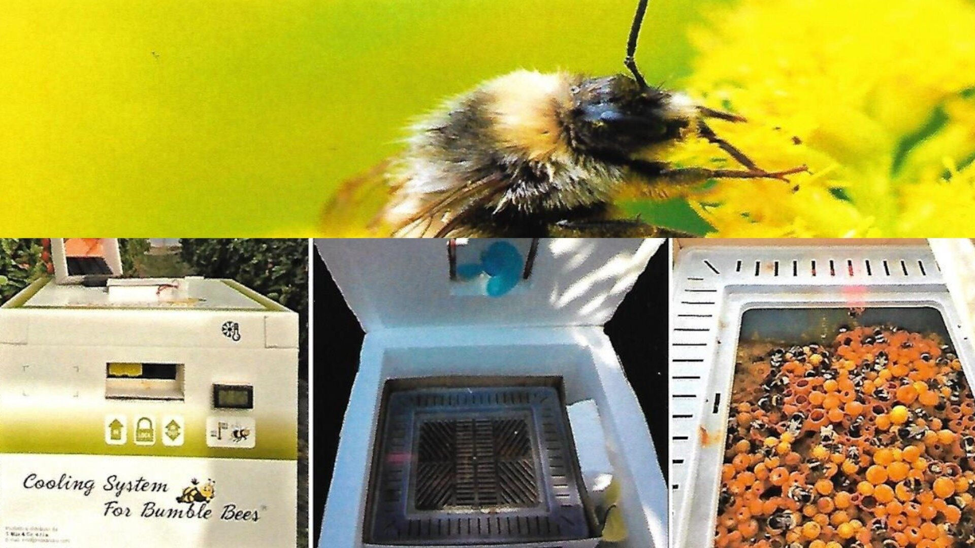 coolingsystemforbumblebees-1624271260.jpg