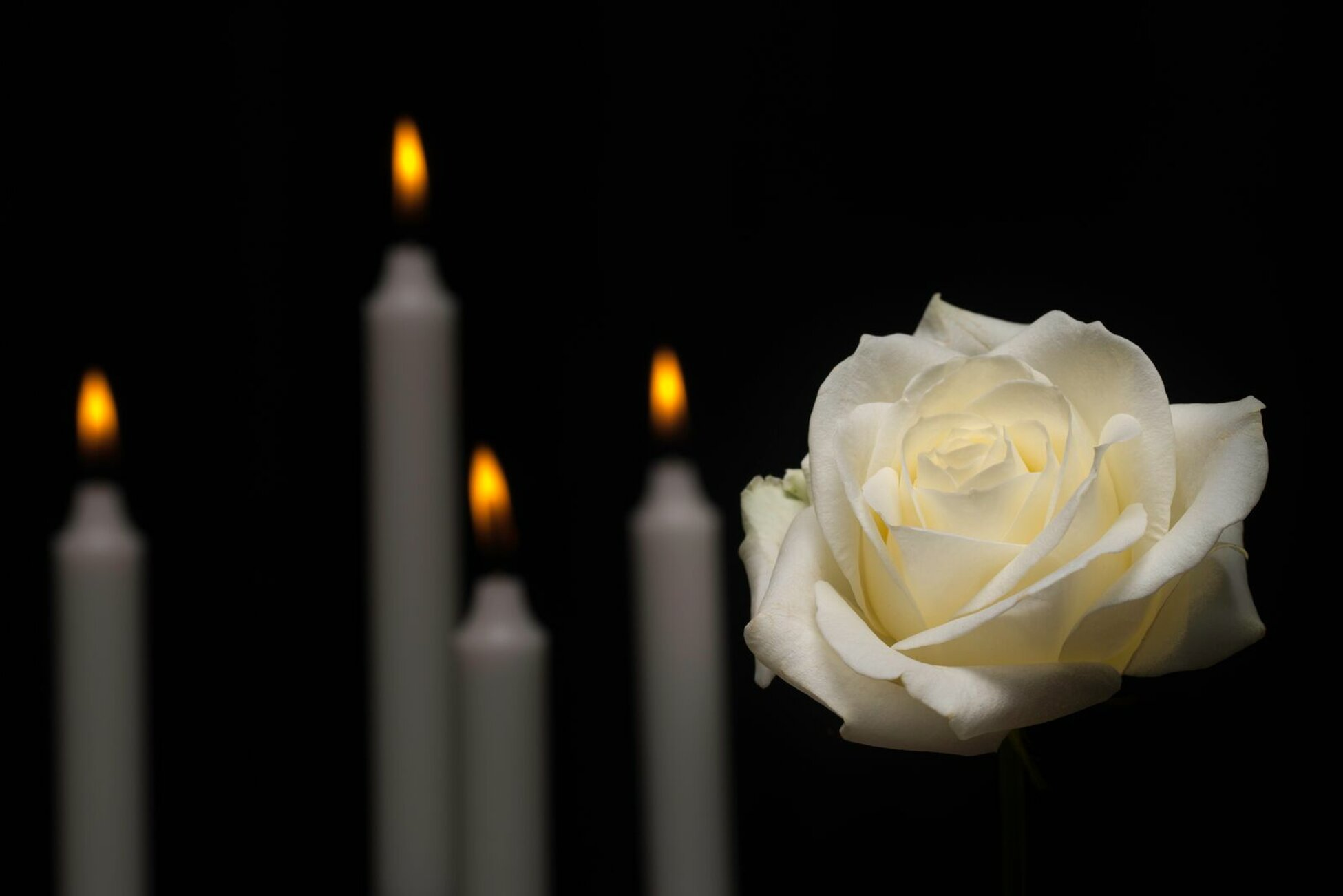 large-white-rose-in-front-of-candles.-5332625755731x3825preview.jpeg