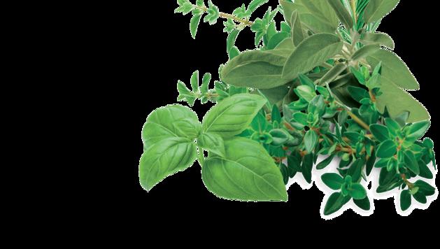 vigorplant-asset-prodotto-hobby-mood.640x1280-aromatiche-1024x580