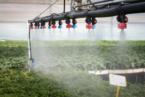 irrigazione piantine