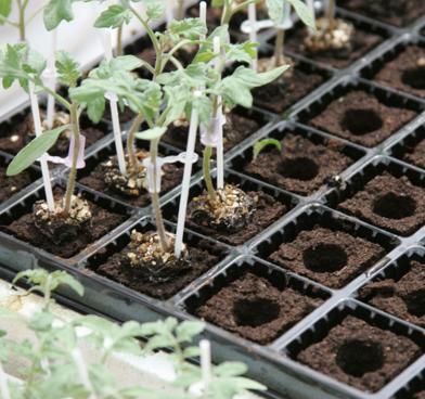 piante contenitori