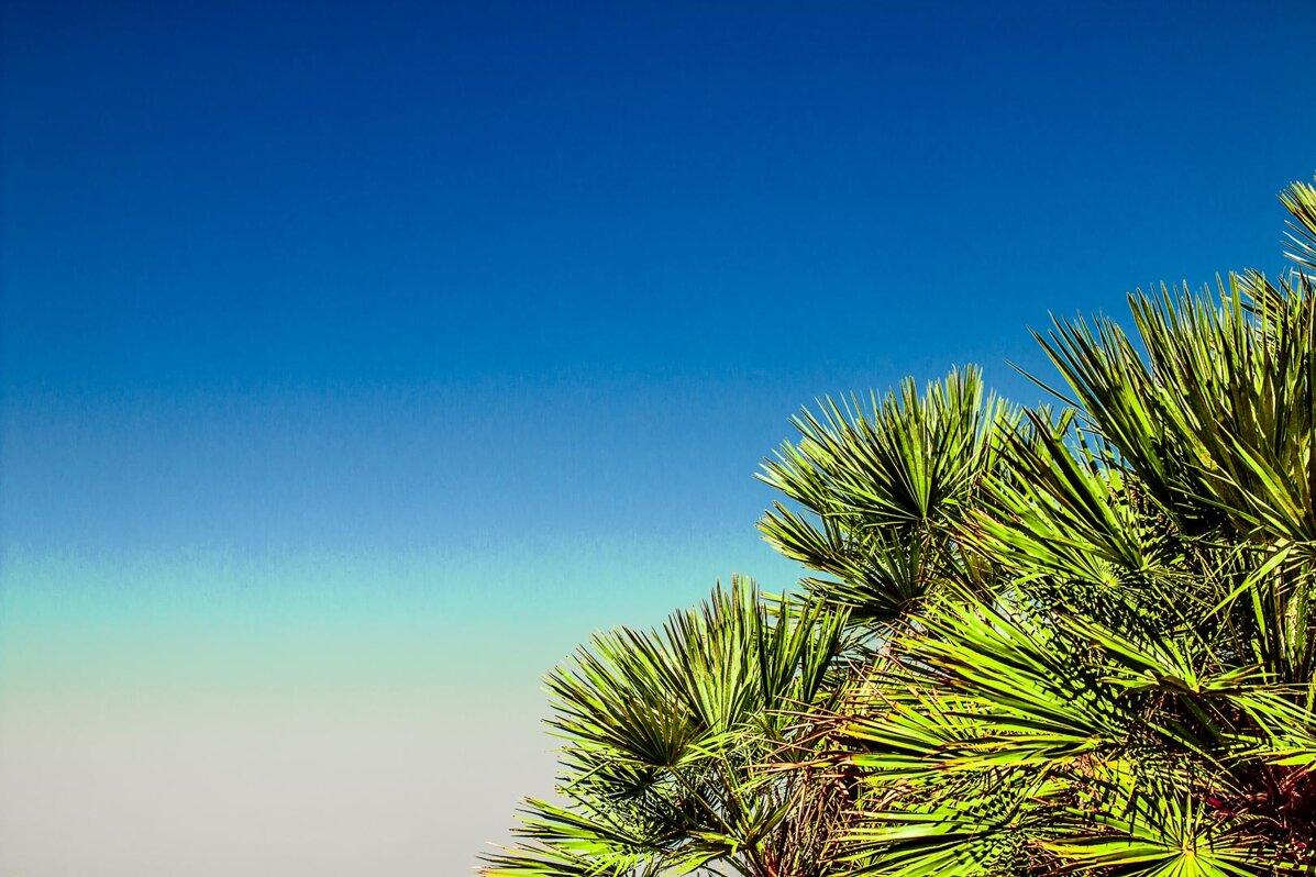 andrea critti sfondo wallpaper palme riserva naturale dello zingaro
